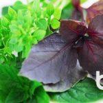 Травы и специи в кулинарии